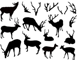 ten deer and antler silhouettes isolated on white
