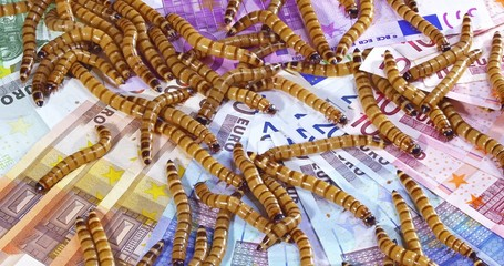 Big ugly worms crawling over euro banknotes background, economic