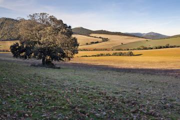 Sierra de la Calderina.Montes de Toledo