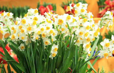 chinese new year decoration plants daffodil flowers