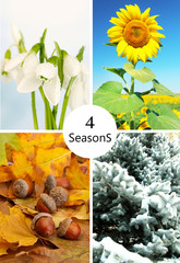 Four seasons collage: winter, spring, summer, autumn, and space