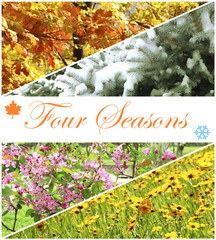 Four seasons collage with space for text: winter, spring,