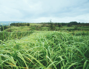 Landscape of summer nature