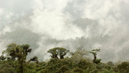 Mist rising through cloudforest in the foothills of the Andes