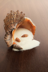 bath salt and seashell on the wooden background