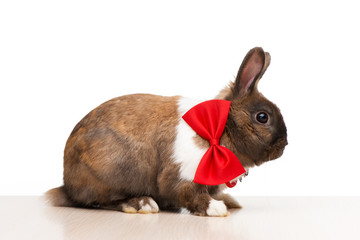 Brown bunny wearing a red bow tie