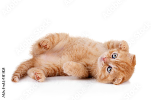 Foto op Plexiglas Kat Red kitten on a white background