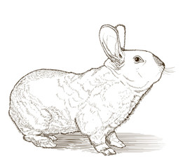 rabbit vector drawing