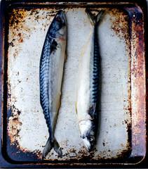 crude mackerel