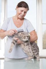 Elderly woman combing cat breed Scottish Fold..