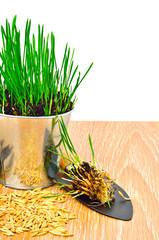 rake, shovel, steel pot with green grass