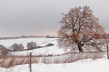 Snowy landscape of an Italian locality