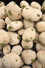 PIle Of Spud Potatoes