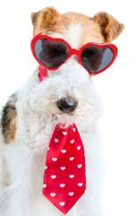 Valentine Terrier