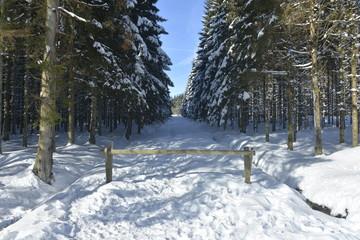 L'un des chemins interdis aux véhicules sous la neige