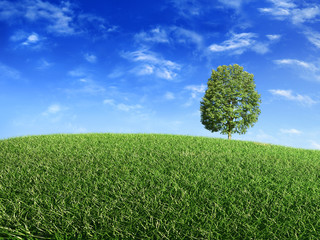 Green grass, tree and sunny sky