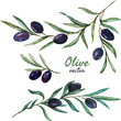Olives - 78333275