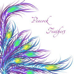 Vector feathers peacock. Color background. Fashionable design ep