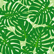 Cotton fabric Seamless pattern with tropical monstera leaves