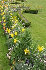 massif de tulipes et haies de buxus