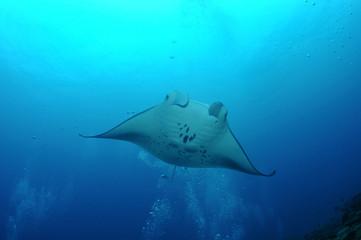 floating manta