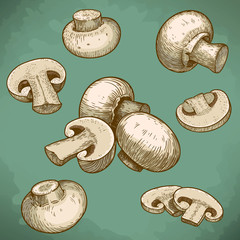 engraving illustration of mushrooms champignons