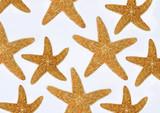 composizione di stelle marine