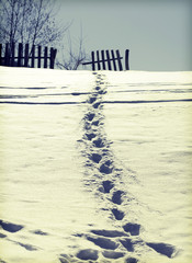 Winter path in the snow