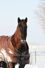 Cold Horse