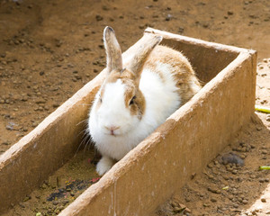 Rabbit in wooden box for feed