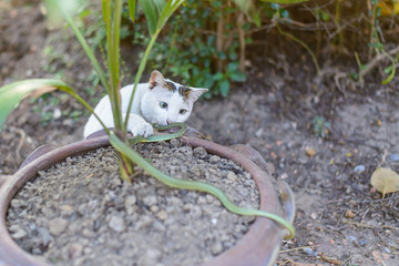 White cat fight green snake in untidy dirty garden, danger