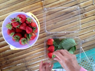 Strawberry  fresh from the farm