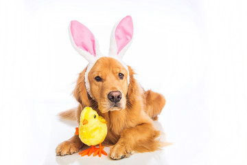 Easter Dog and a Chick
