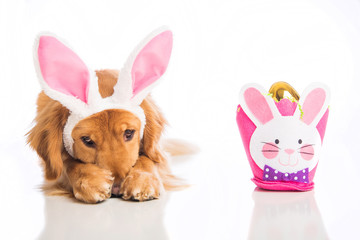 Embarrassed Easter Dog