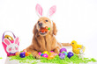 easter bunny dog - 78354441