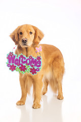 Dog holding welcome sign