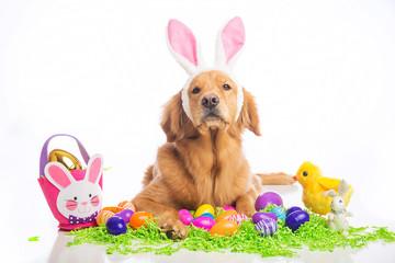easter bunny dog