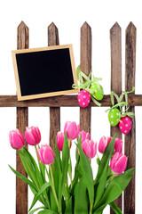 Zaun mit Ostereiern und Tulpen