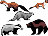 european mustelidae - marten, badger poster