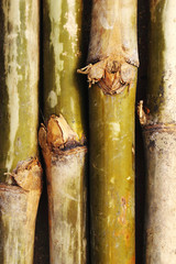 old bamboo