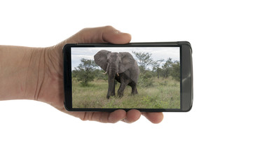 female hand with mobile phone elephant