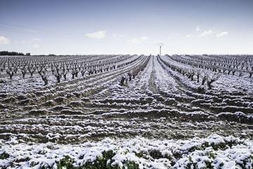Vineyards snowfall