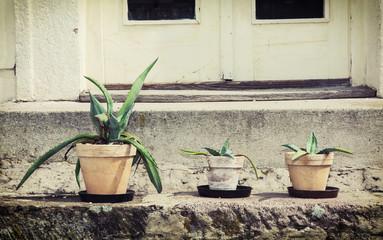 Three various succulent plants in flower pots