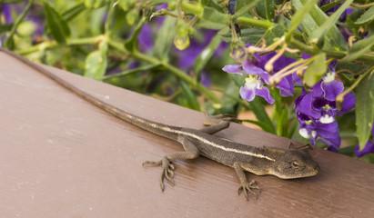 Lizard and purple flower