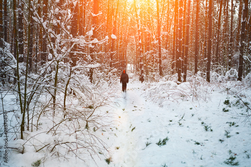 canvas print picture Man walking in snowy forest
