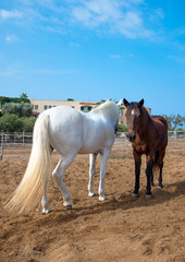 Portrait of horses in the paddock.
