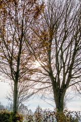 Herbstbäume im Gegenlicht