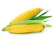 Leinwanddruck Bild - corn