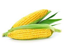 """Постер, картина, фотообои """"corn"""""""