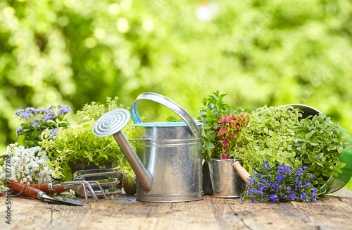 Outdoor gardening tools on old wood table - 78377812